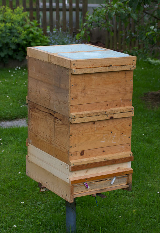 bees hive 2
