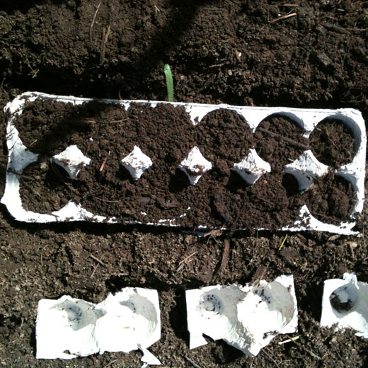 Next, fill your carton half way with potting soil or garden dirt. Add your seeds to each outlet. Finish off by adding more dirt to cover the seedlings.